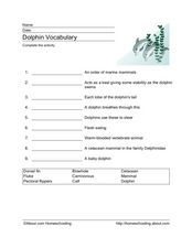 Dolphin Vocabulary Worksheet
