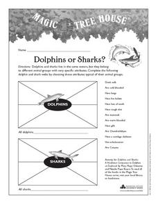 Dolphins or Sharks? Worksheet