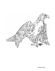 Eagle Drawing Worksheet
