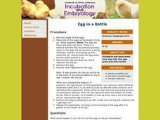 Egg in a Bottle Lesson Plan