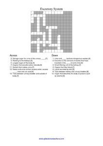 excretory system 4th 5th grade worksheet lesson planet. Black Bedroom Furniture Sets. Home Design Ideas