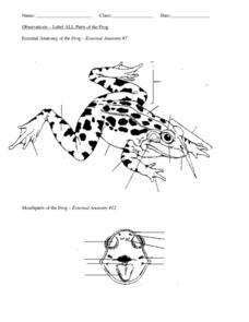 External Anatomy of the Frog Worksheet