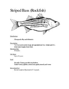 Facts on Fish Species Lesson Plan