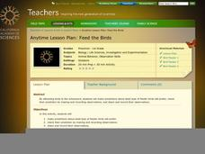 Feed The Birds Lesson Plan