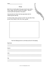Ferns Worksheet