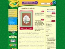 Fine-Feathered Falcons Lesson Plan