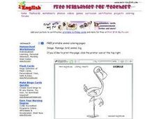Flamingo Drawing Worksheet