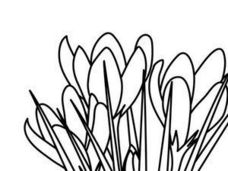 Flowers coloring sheet Worksheet