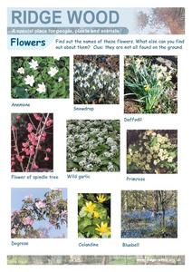 Flowers of Ridgewood, United Kingdom Worksheet