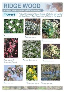 Flowers Worksheet