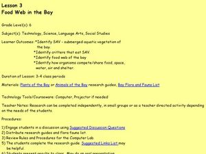 Food Web in the Bay Lesson Plan