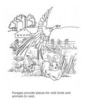 Forages Coloring Sheet Lesson Plan