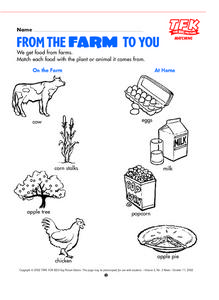 From The Farm To You- Matching Activity Lesson Plan