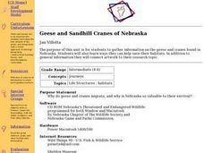 Geese and Sandhill Cranes of Nebraska Lesson Plan