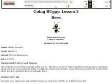 Going Buggy: Lesson 3: Bees Lesson Plan