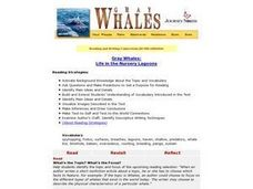 Gray Whales:  Life in the Nursery Lagoons Lesson Plan