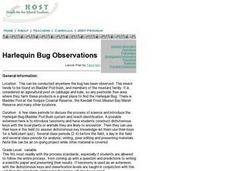 Harlequin Bug Observations Lesson Plan