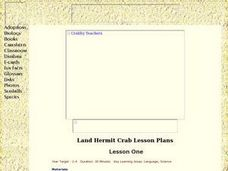 Hermit Crabs - Lesson One Lesson Plan