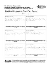 Horseshoe Crab Facts Lesson Plan