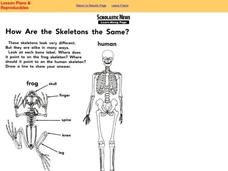 How Are the Skeletons the Same? Worksheet