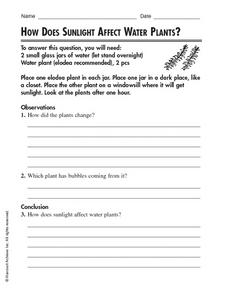 How Does Sunlight Affect Water Plants? Worksheet