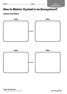 How is Matter Cycled in an Ecosystem? Worksheet