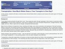 How Much Water Does A Tree Transpire In A Day Lesson Plan