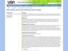 How Weather Affects the Hatching of Brine Shrimp Lesson Plan