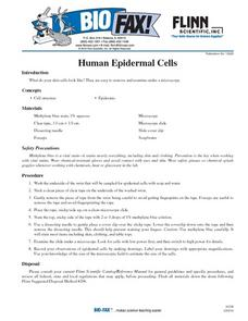Human Epidermal Cells Lesson Plan