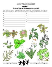 Identifying Flowers in the Fall Worksheet