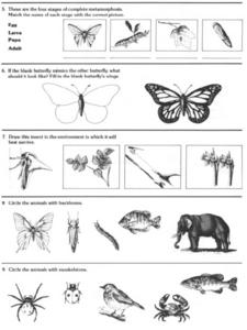 Insect Information Worksheet