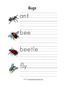 Insect Printing Practice Worksheet