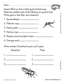 Insects And Pests Lesson Plan