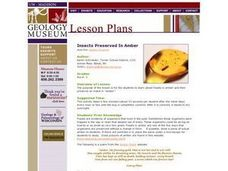 Insects Preserved in Amber Lesson Plan