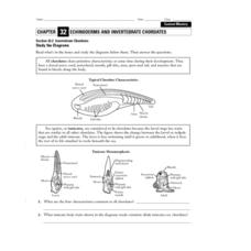 Invertebrate Chordates Worksheet