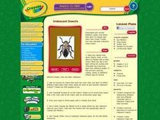 Iridescent Insects Lesson Plan