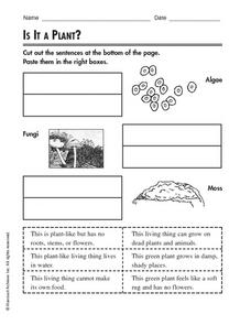 Is it a Plant? Worksheet