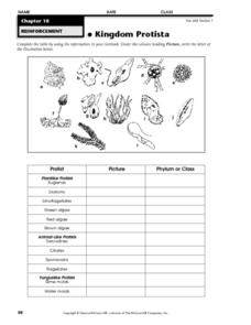 Kingdom Protista Worksheet