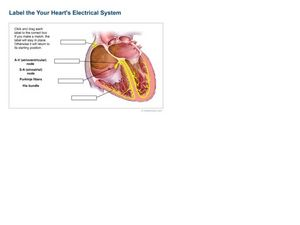 Label The Heart's Electrical System Worksheet