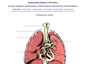Label the Respiratory System Worksheet