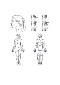 Labeling the Female Human Body Worksheet