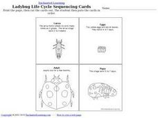 Ladybug Life Cycle Sequencing Cards Worksheet