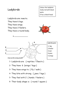 Ladybugs Worksheet