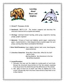 Learning About Bears And Dolphins Lesson Plan