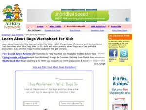 Learning About Bugs- What Bugs Do Worksheet