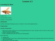 Learning By Bees Lesson Plan