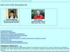 Life Cycle of the Drosophila Fly Lesson Plan