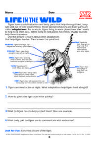 Life In The Wild Lesson Plan