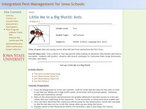 Little Me in a Big World: Ants Lesson Plan