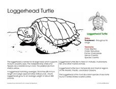 Loggerhead Turtle Worksheet